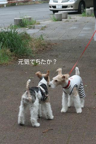Milkyちゃんとお散歩だぁ_c0070377_063259.jpg