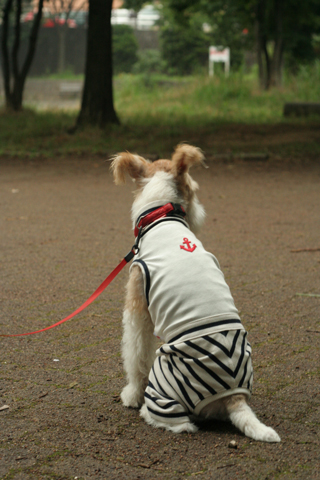Milkyちゃんとお散歩だぁ_c0070377_072264.jpg