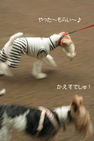 Milkyちゃんとお散歩だぁ_c0070377_07350.jpg