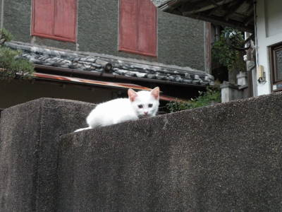 Kitten on the Wall_c0193077_2259499.jpg