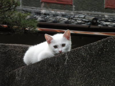 Kitten on the Wall_c0193077_23154994.jpg
