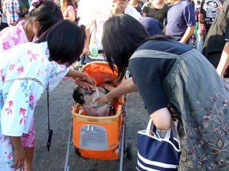 土崎港曳山(ひきやま)祭り_f0019498_20131343.jpg