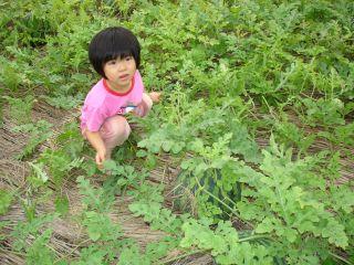 マコの畑は大豊作!スイカもできたよ!_e0166301_13255874.jpg