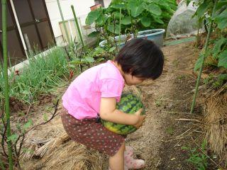マコの畑は大豊作!スイカもできたよ!_e0166301_13315693.jpg