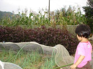 マコの畑は大豊作!スイカもできたよ!_e0166301_13551672.jpg