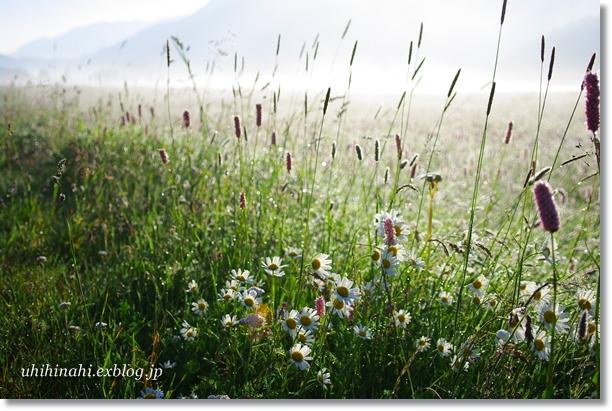スイス シルス湖の朝_f0179404_23552280.jpg