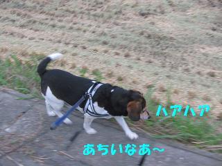 d0104209_20405580.jpg