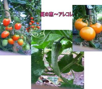 d0070316_1704937.jpg