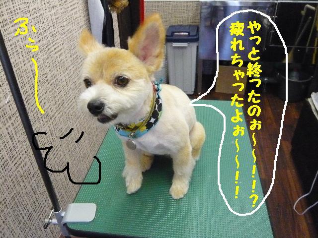 CHECK!!&疲れたけど・・・2連発!!_b0130018_1835746.jpg