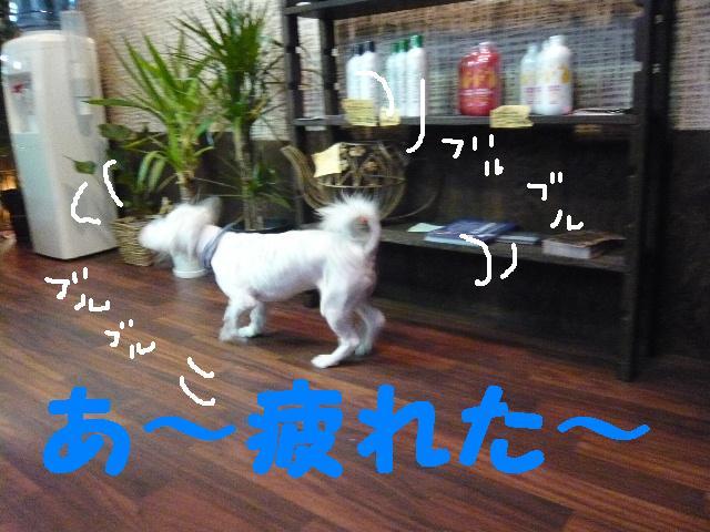 CHECK!!&疲れたけど・・・2連発!!_b0130018_183743100.jpg