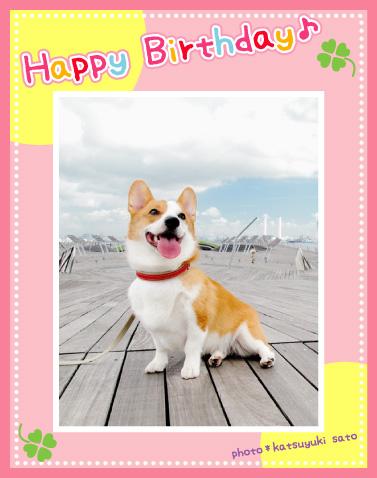 小町ちゃん、お誕生日おめでとう♪_d0102523_15475669.jpg