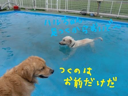 f0176830_176397.jpg