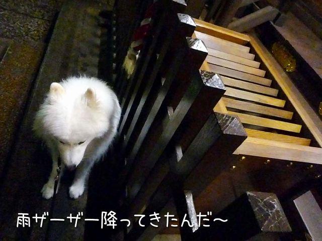 お散歩神だのみ_c0062832_1838084.jpg