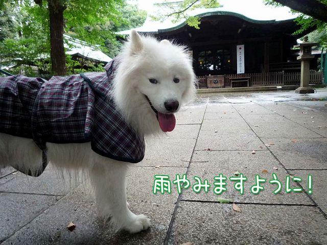 お散歩神だのみ_c0062832_18383752.jpg