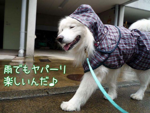 お散歩神だのみ_c0062832_1839019.jpg