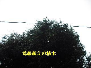 f0031037_2121595.jpg