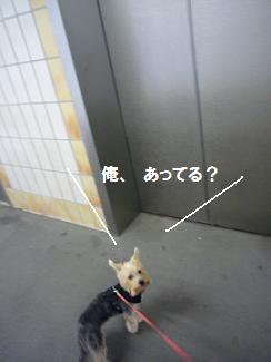 e0076052_18302784.jpg