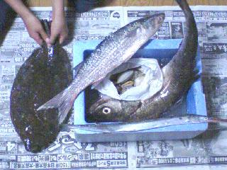 大漁★_b0108363_21465368.jpg