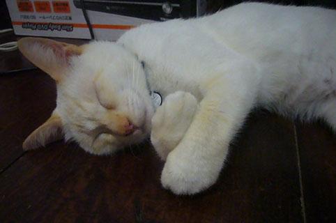 sleeping babies._c0153966_18291243.jpg