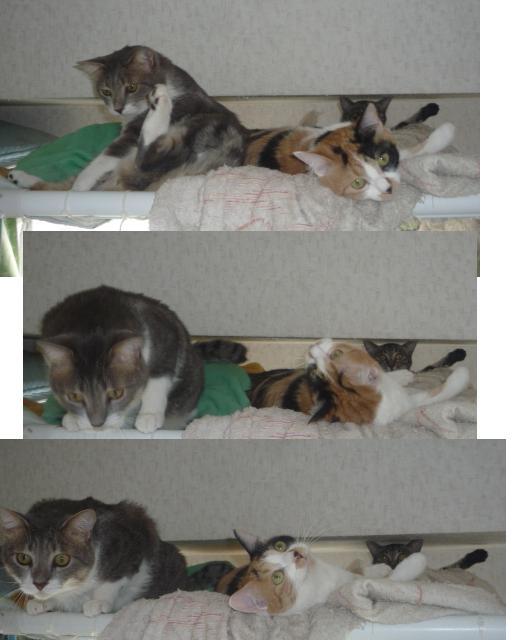 夜寝ようとシルフィを旦那が布団に引っ張り込むと_b0112380_2004193.jpg
