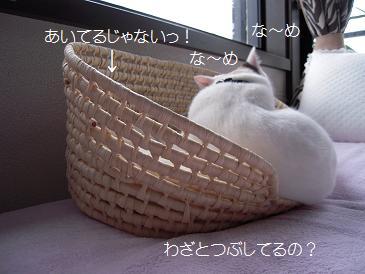 c0139488_1501595.jpg