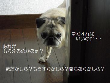 c0139488_1525744.jpg