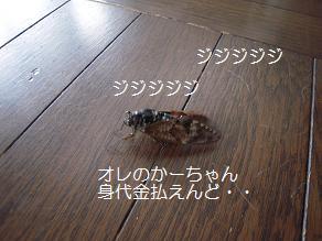c0139488_1554670.jpg