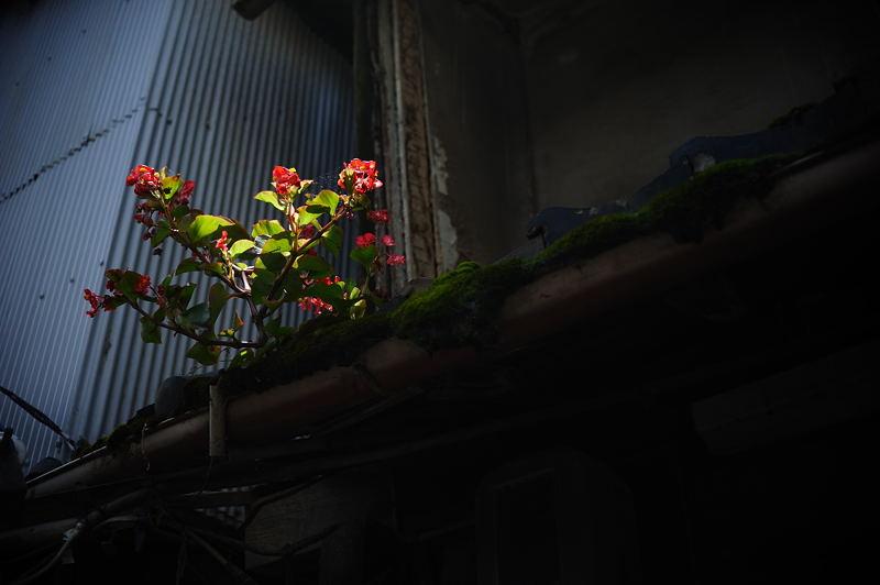 谷町六丁目・空掘探検! 其の三_f0032011_18131251.jpg