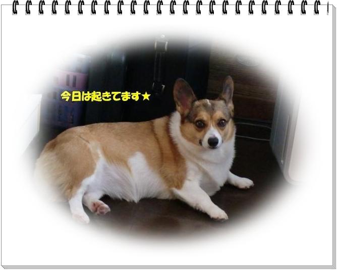 f0182121_11281547.jpg