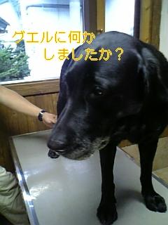 f0148927_6314119.jpg