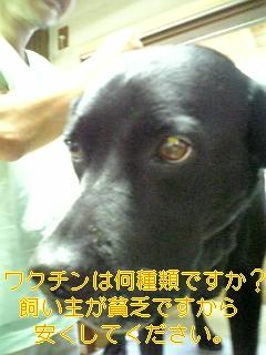 f0148927_6333783.jpg