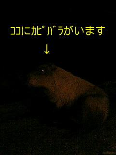 f0138828_21485640.jpg