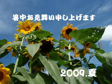 e0175838_1540546.jpg
