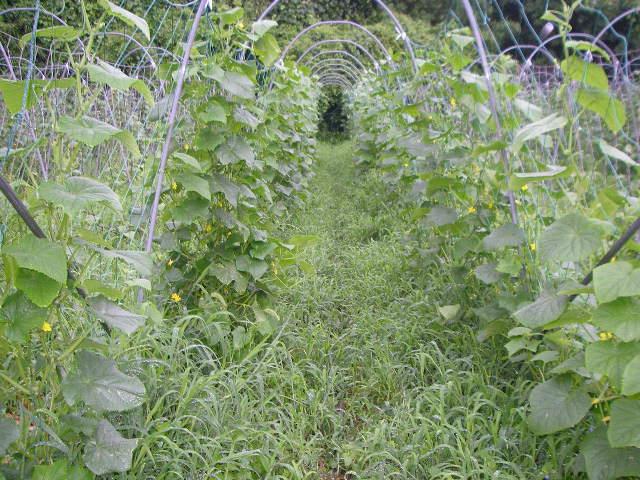 毎日収穫_e0181260_10555077.jpg