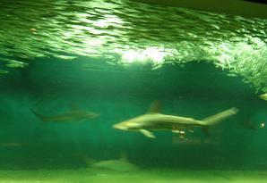 ひなちゃんと水族館へ その二_f0139963_614186.jpg