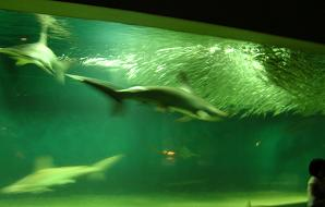 ひなちゃんと水族館へ その二_f0139963_6152282.jpg