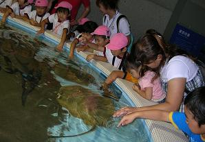 ひなちゃんと水族館へ その二_f0139963_6282130.jpg