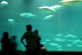 ひなちゃんと水族館へ その二_f0139963_6305730.jpg