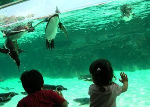 ひなちゃんと水族館へ その二_f0139963_639130.jpg