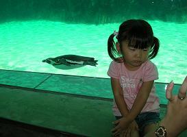 ひなちゃんと水族館へ その二_f0139963_6414679.jpg