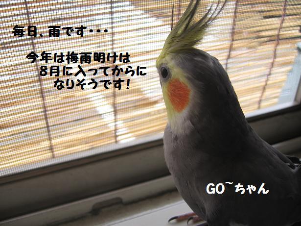 e0027078_1343012.jpg