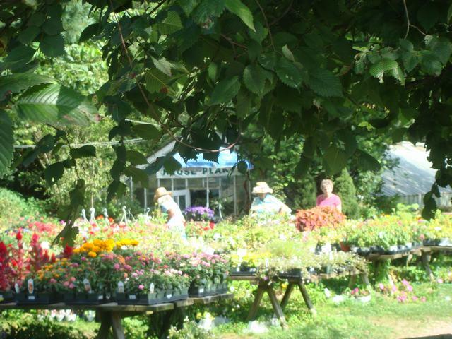 田舎の苗木園は夏の花の狂宴まっさなか、_d0100880_7494587.jpg