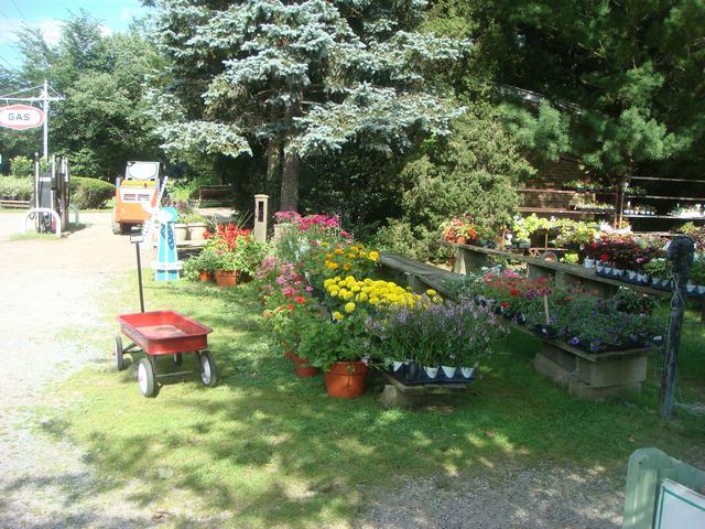 田舎の苗木園は夏の花の狂宴まっさなか、_d0100880_7495656.jpg