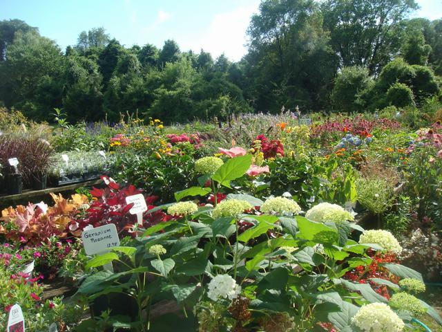 田舎の苗木園は夏の花の狂宴まっさなか、_d0100880_7503186.jpg