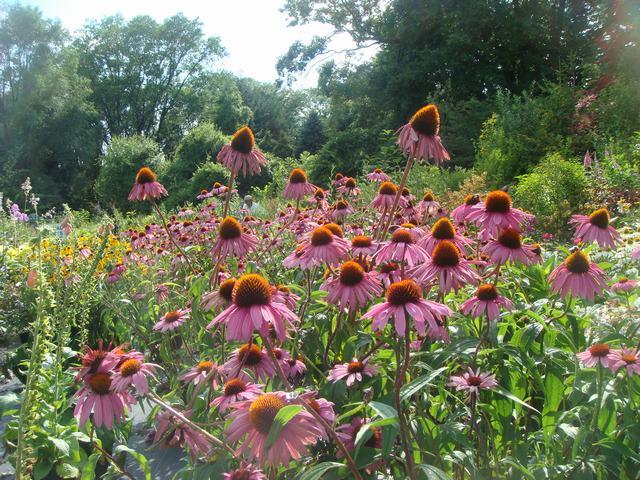 田舎の苗木園は夏の花の狂宴まっさなか、_d0100880_7543860.jpg