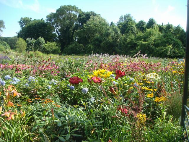 田舎の苗木園は夏の花の狂宴まっさなか、_d0100880_754610.jpg