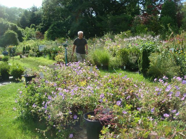 田舎の苗木園は夏の花の狂宴まっさなか、_d0100880_756698.jpg