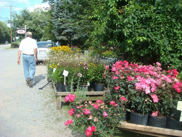 田舎の苗木園は夏の花の狂宴まっさなか、_d0100880_8165783.jpg