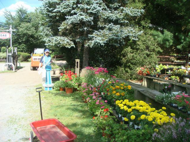 田舎の苗木園は夏の花の狂宴まっさなか、_d0100880_8171840.jpg