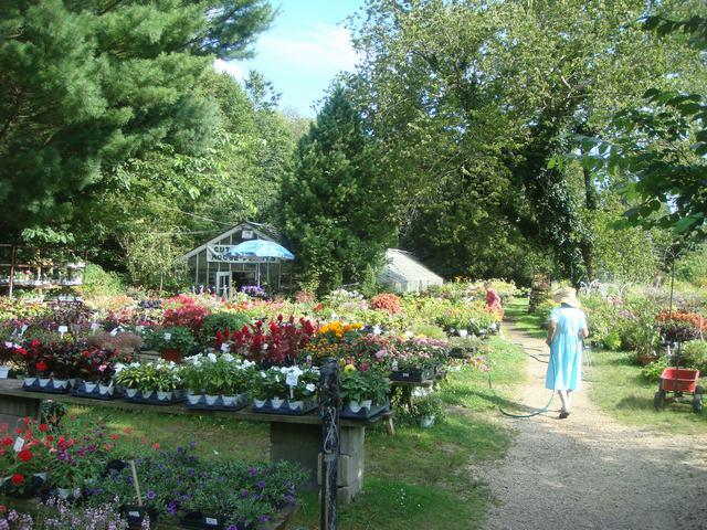 田舎の苗木園は夏の花の狂宴まっさなか、_d0100880_8173442.jpg